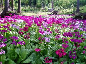 花の森 山野草花園